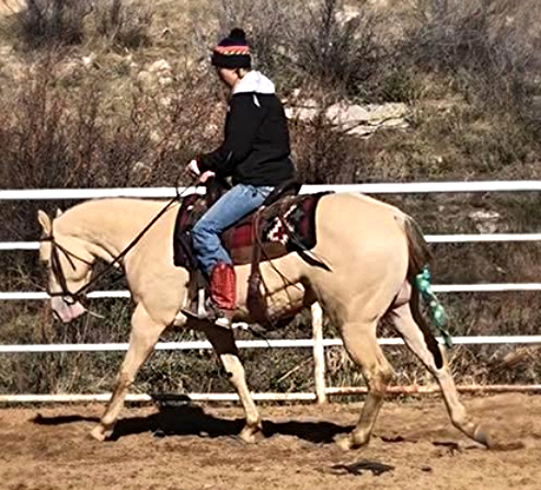 AQHA Rooster on the Rocks ~ 2.5 yrs
